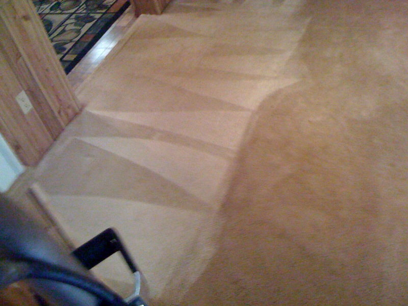 Carpet Cleaned Properly