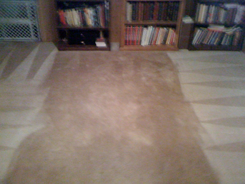 Three dog carpet Cleaned