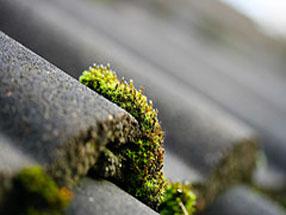 Tile roof moss