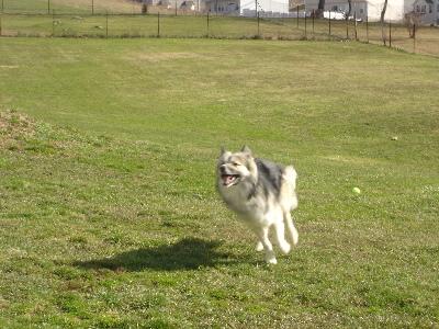 Dog Boarding Zelienople Pa