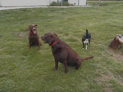 Dog Boarding Washington Pa
