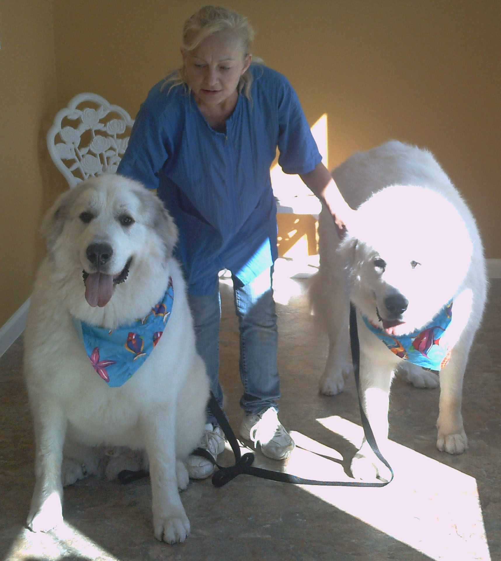Dog Grooming Palm Bay Fl