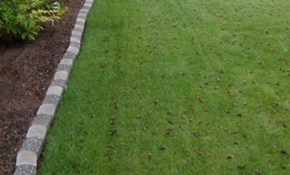 10% off Fall Lawn Aeration & Overseeding
