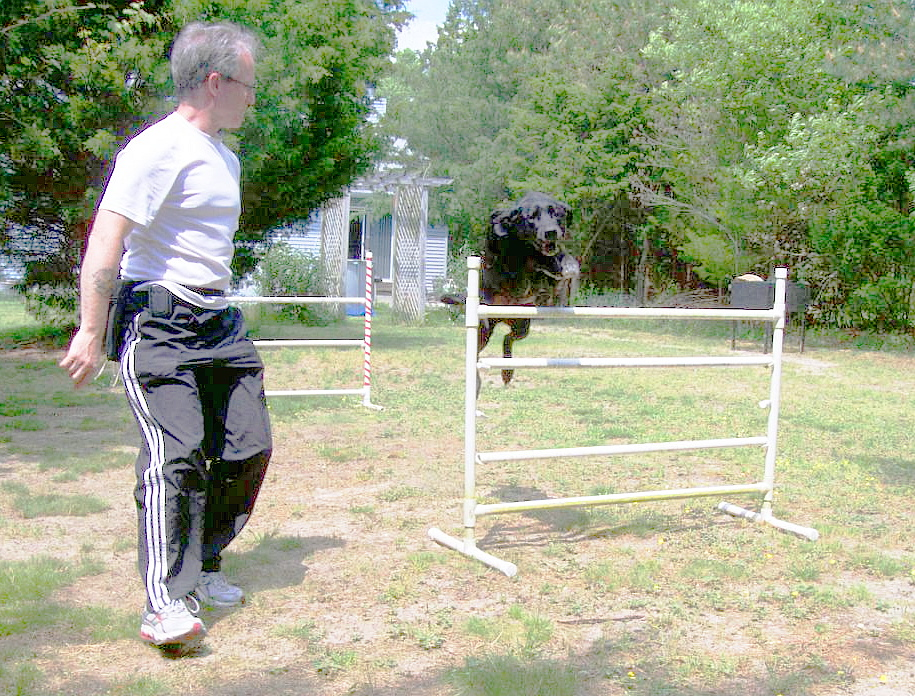 Northfield Dog Training Reviews