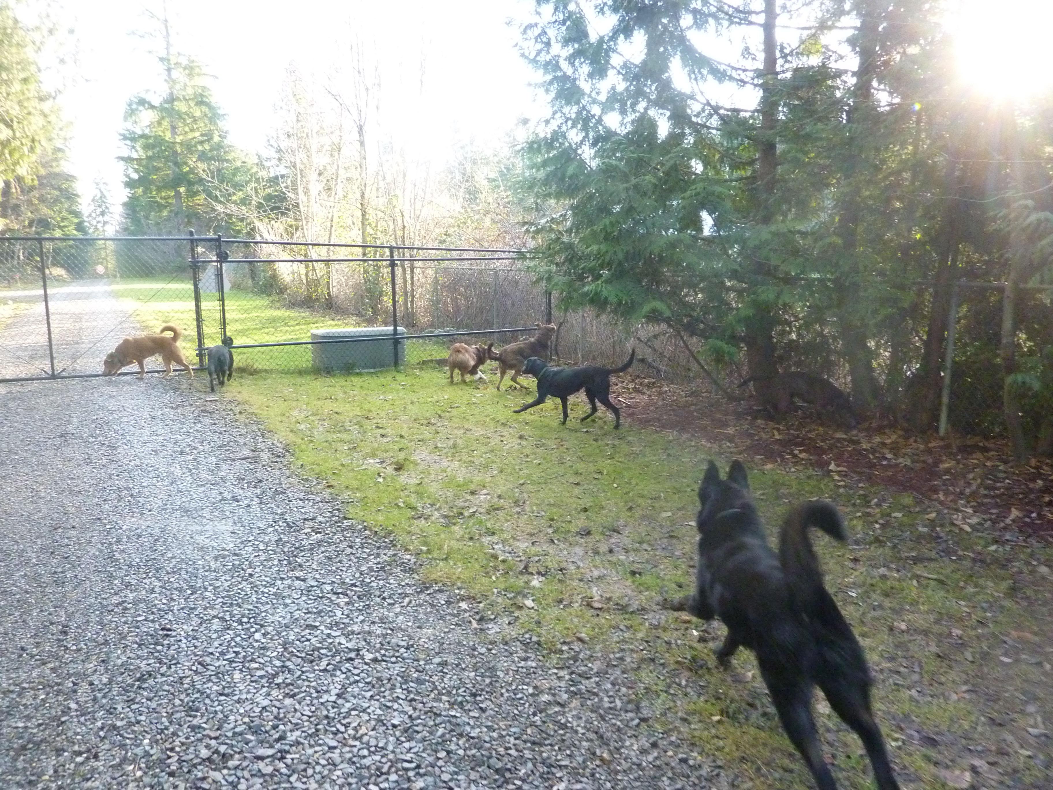 Dog Day Care Tukwila