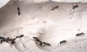 $90 for a Pest Control Evaluation & Initial...
