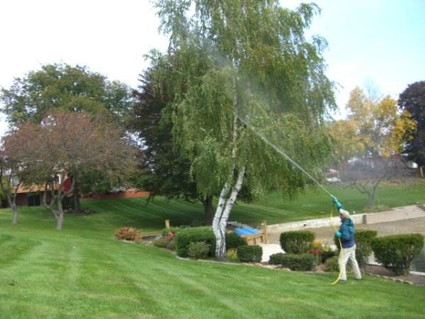 Natural Way Lawn Care Reviews