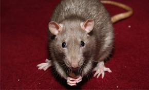 $175 for Rodent Abatement Package!