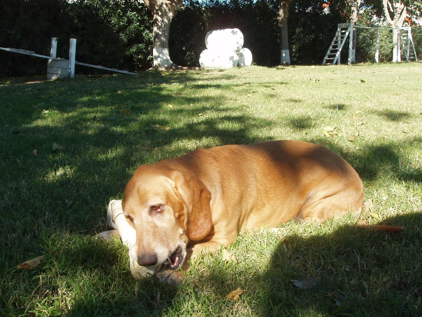 Las Vegas Dog Kennel Reviews