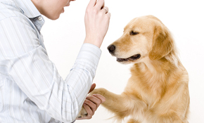 $80 for 1 Hour of Dog Behavioral Training