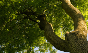 $129 for Tree Assessment