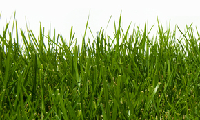$1,250 for One-Year Lawn/Landscape Maintenance...