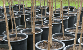 $85 for Fruit Tree Planting