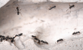$69 for Comprehensive Pest Inspection Plus...