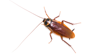 $79 Interior and Exterior Pest Control Treatment