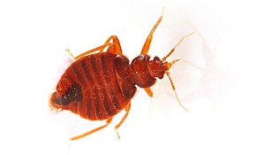 $39 for Complete Home Bed Bug Inspection...