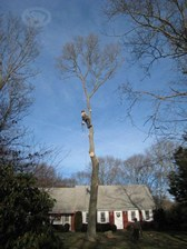 Difficult Tree Removal