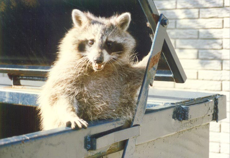 Critter Control Of Indianapolis Indianapolis In 46268