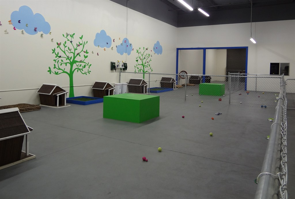 freeplay dogs daycare cageless boarding grooming concord
