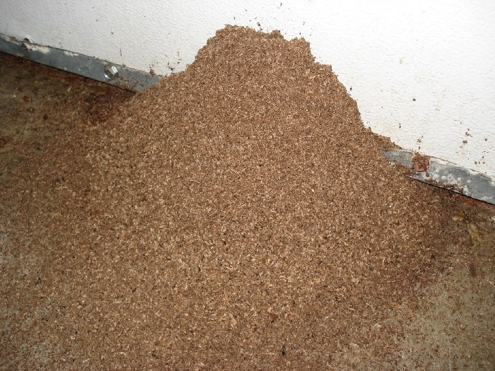 White Termite Droppings Assassin exterminating & pest