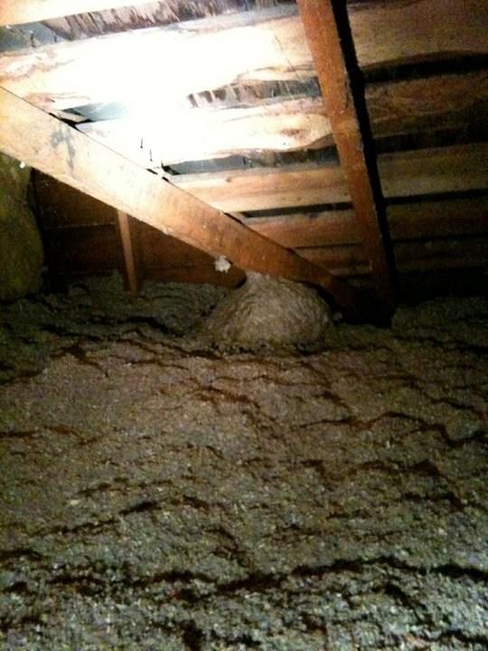 Large Wasp Nest