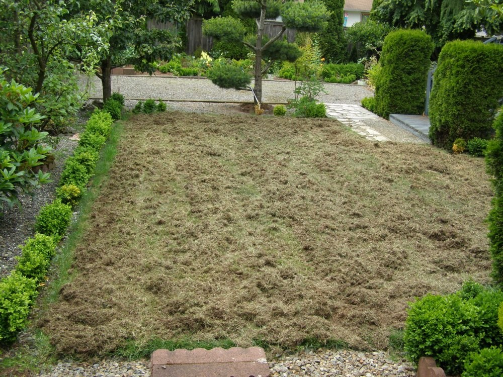 Freshly Thatched Lawn