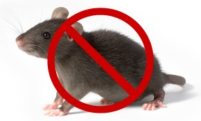 $39 For Whole House Rodent Inspection With...
