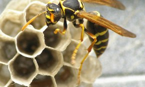 $99 for Bee- and Wasp-Prevention for Your...