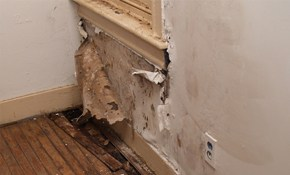 $259 for Comprehensive Mold Survey and Report