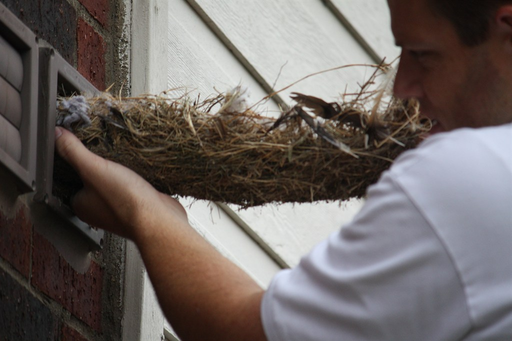 how to get rid of wasp nest in dryer vent