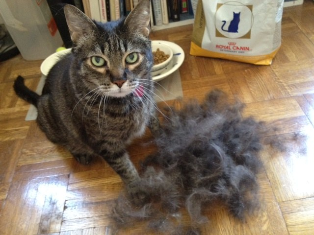 ریزش موی گربه