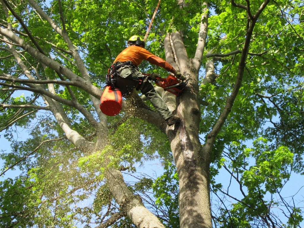 Iron tree service wenham ma 01984 angies list for Wallpaper removal home remedy