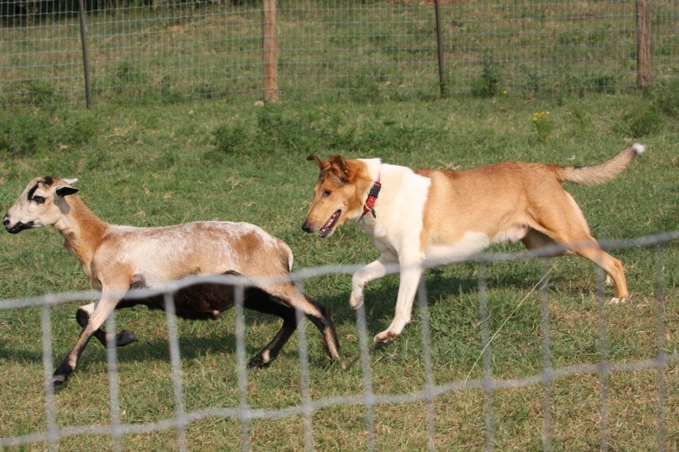 Dog Training Dallas Reviews