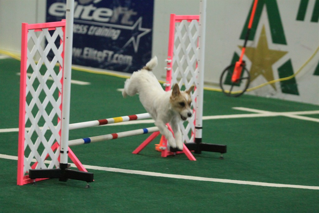 Smartypaws Dog Training