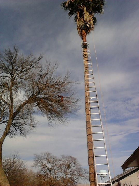 spur tree dating site Treestuffcom professional arborist supplies and tree climbing gear treestuffcom professional arborist supplies and tree climbing powerscender spur mounted.