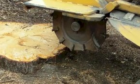 $125 Worth of Stump Grinding Service for...