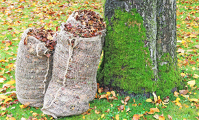 $185 for $250 Credit Toward Leaf Clean-Up