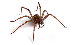 $219 for a  Interior / Exterior Spider Pest...