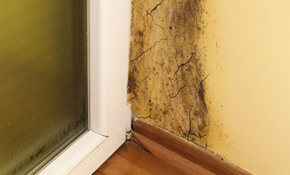 $225 for $250 Credit Toward Mold Mitigation...