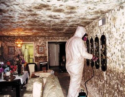 Severe mold problem