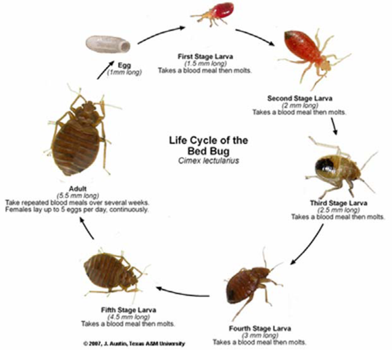 Informative speech bed bug