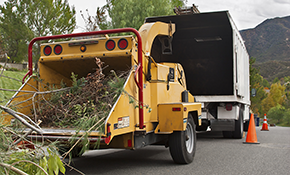 $100 for $200 Credit Toward Tree Removal