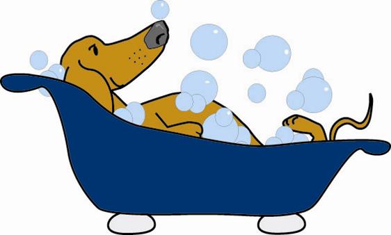 Dog Grooming Roslindale