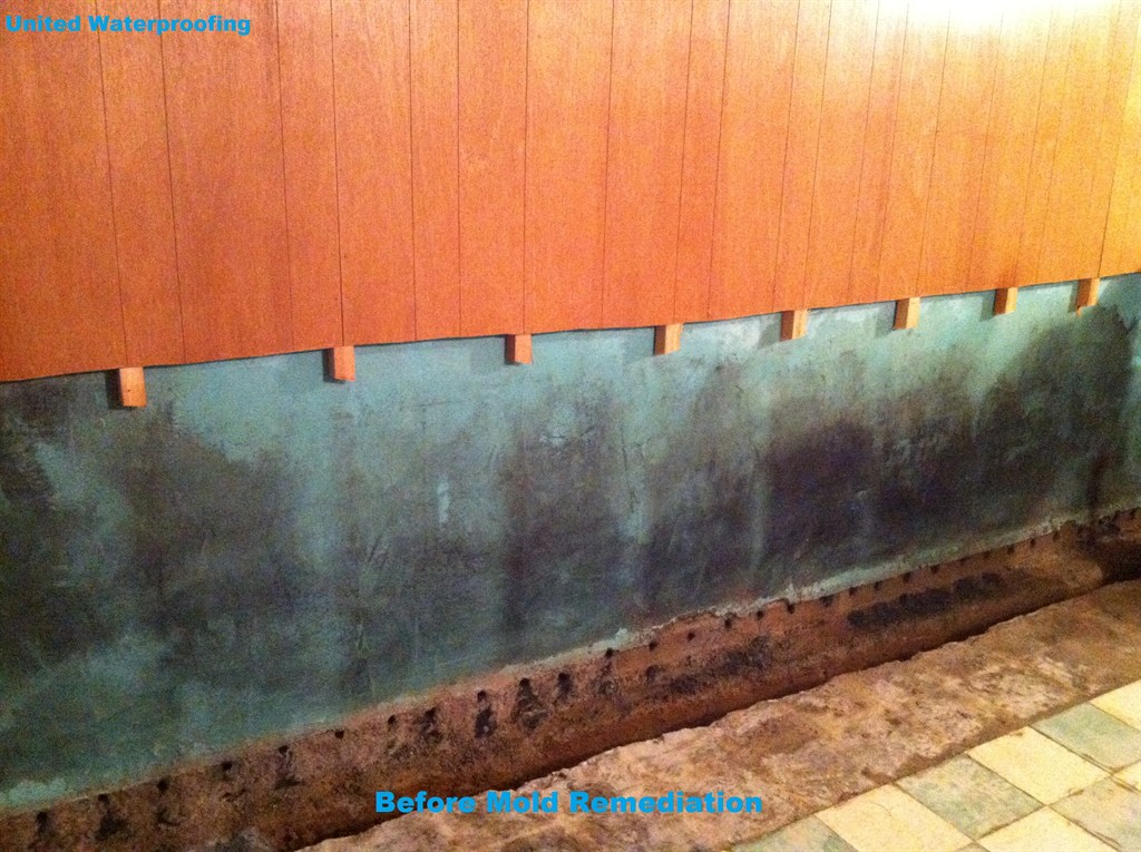 Wall Before Mold Remediation
