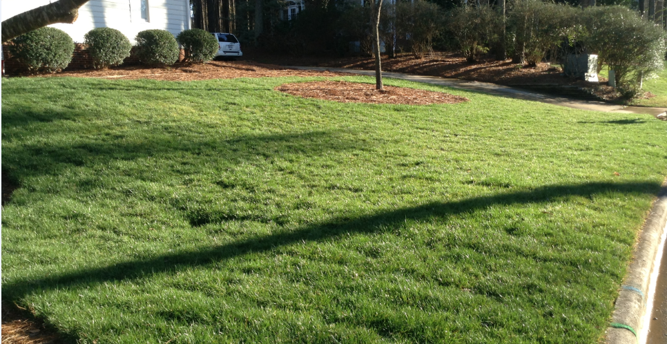 TouchPoint Lawn Care - Raleigh, NC 27613 - Angies List