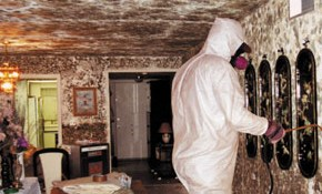 Pay $99 for $175 of Mold Remediation Home...