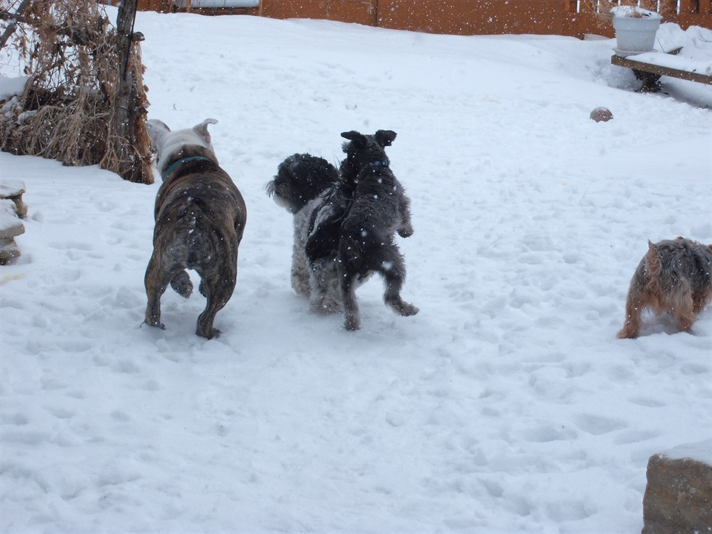 Dog Kennels Winona Mn