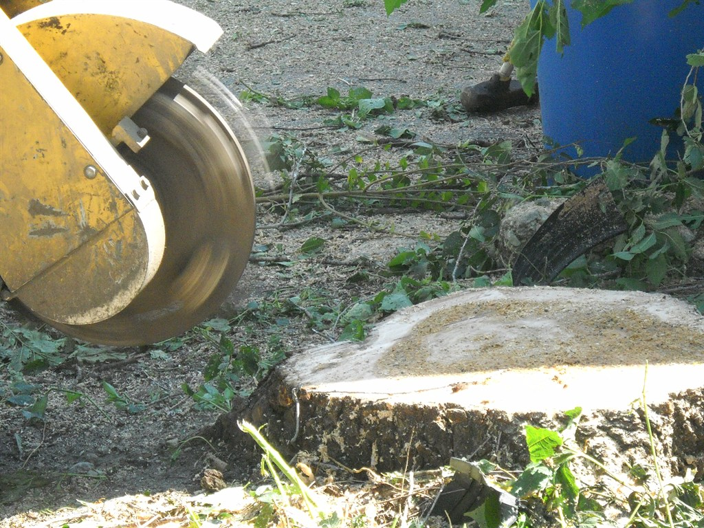 Image Result For Cost Of Stump Grinding