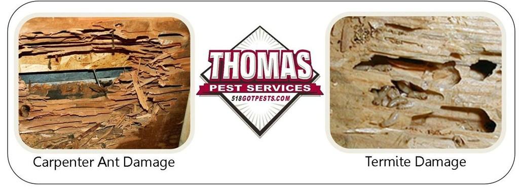 Thomas Pest Services Albany Ny 12205 Angie S List