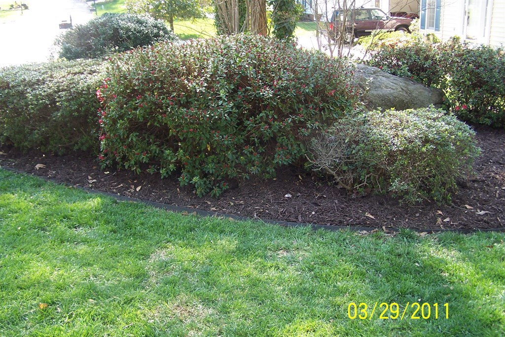 Tony 39 s lawn service llc greenville sc 29605 angies list for Landscaping rocks greenville sc